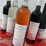 Pětice nových vín v prodeji na našem e-shopu