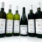 Degustační kolekce vín, které nezklamou...