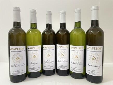 Typická vína pro Znojemsko