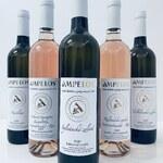 Nová vína ročníku 2020 na našem e-shopu