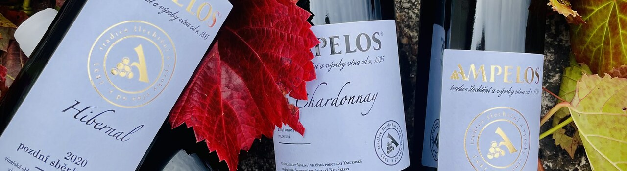 Chardonnay, Hibernal, Sauvignon a Rulandské šedé