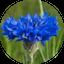 Bylinky květ