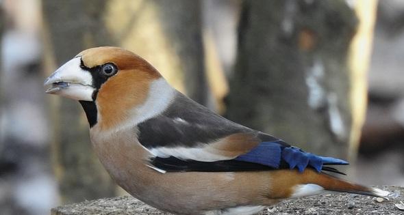 ORNIS - ornithological station