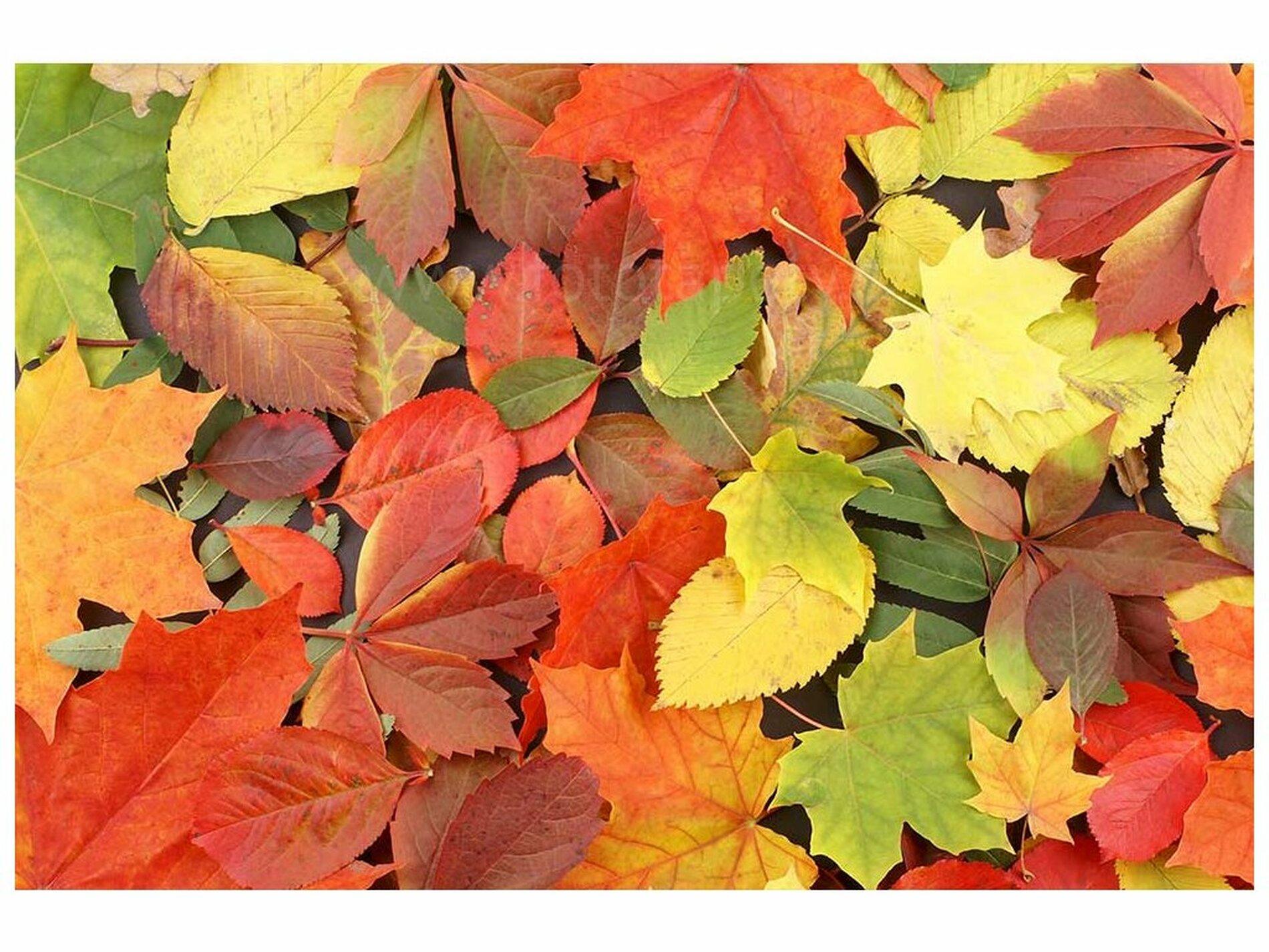 Užívejte podzim v přírodě, vzdělávejte se, těšte se na společné setkávání v budoucnosti - tipy ekoporadny