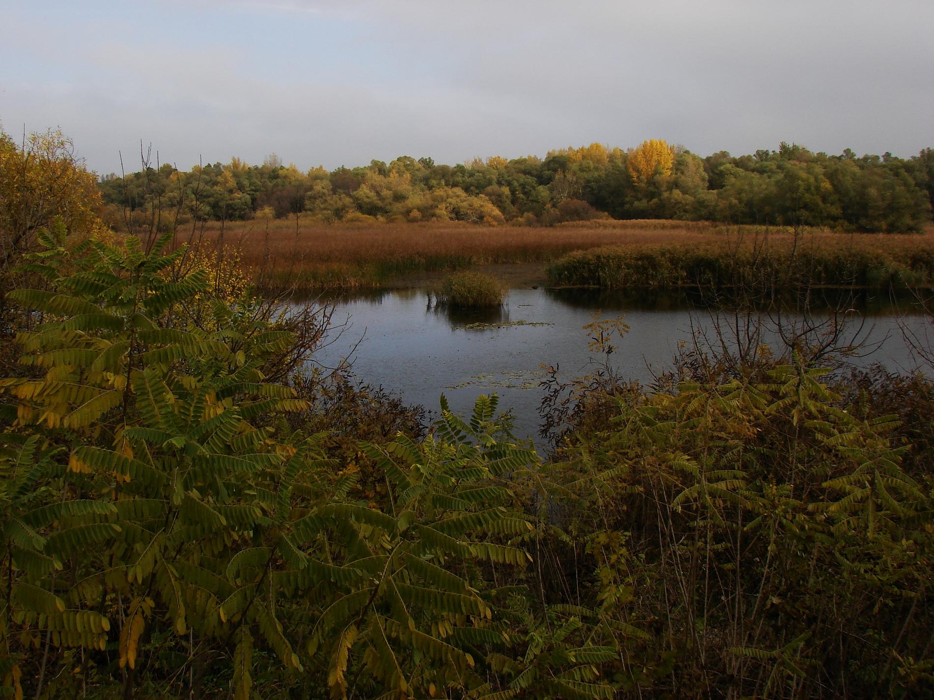Ornitologická exkurze – Záhlinice