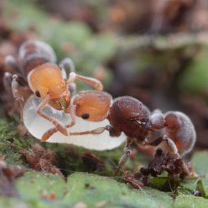 mravenci1