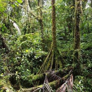 prales na výšku